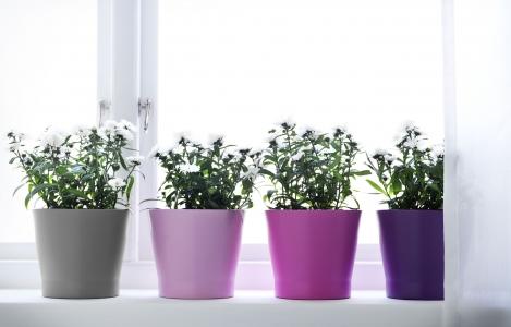 Výber a umiestnenie izbových rastlín v byte