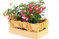 Dekoratívne drevené kvetináče