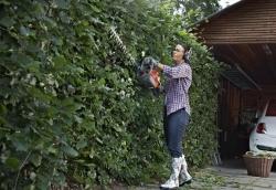 Ozdravná kúra pre živé ploty