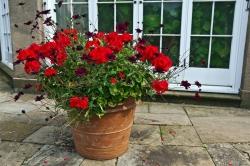 Ako prezimovať kvety?