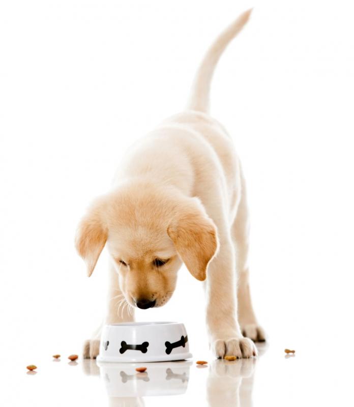 Starostlivosť o psíkov
