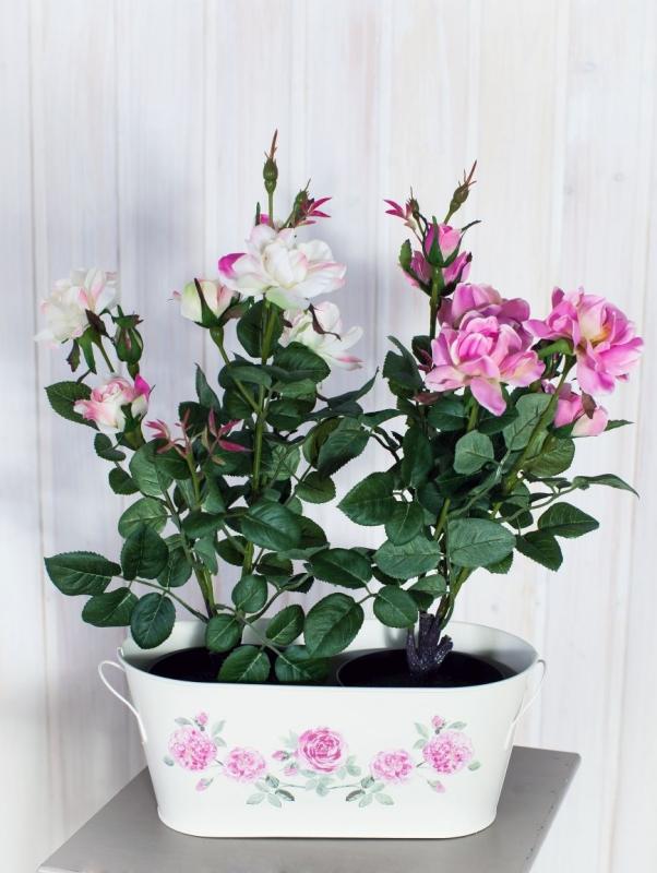 Izbové rastliny na čistenie vzduchu