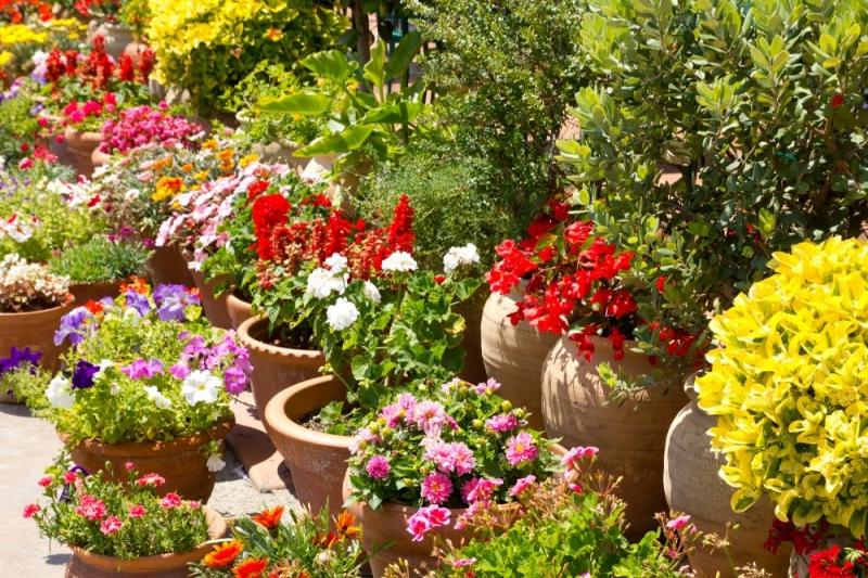 Pozitívna energia v harmonickej záhrade