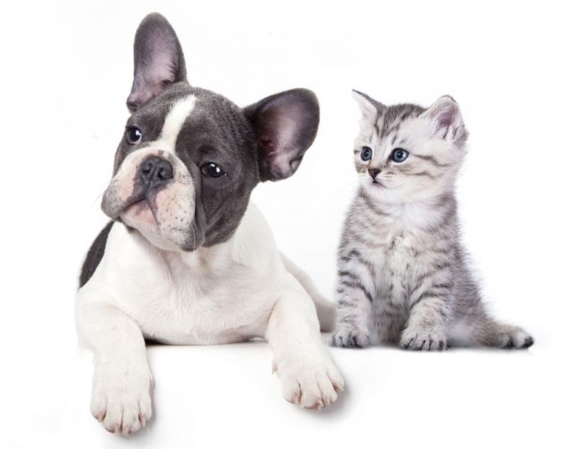 Zvieratko do bytu vyberte uvážene